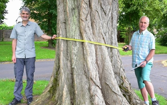 Kevin Griffiths and Malcolm Thomas Measure a Tree