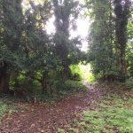 A path through a woodland