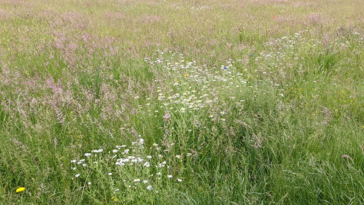 A view of a grassland meadow