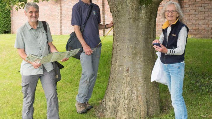 Volunteers surveying a tree